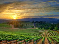 Mundo del vino