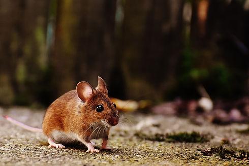 animal-animal-photography-blurred-backgr