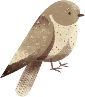 Oiseaux du parc