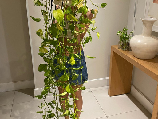 De tanto comer vegetais, virei planta!!