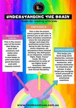 Understanding The Brain Information Sheet Rainbow Muse