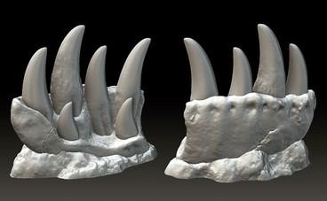T-Rex Teeth Progression