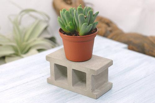 Concrete Mini Cinder Block