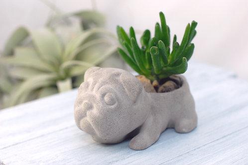 Concrete Pug Succulent Planter