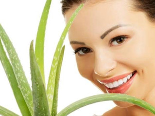 Aloe Vera, the beloved hero of skincare