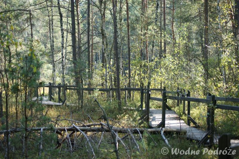 Drewniana kładka biegnąca przez całe Goździkowe Bagno