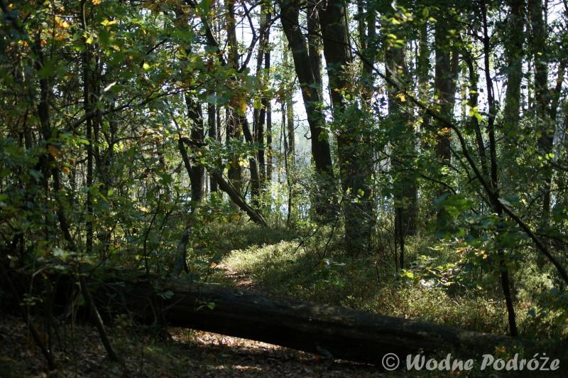 Wyjście z lasu na Bocianowskie Bagno