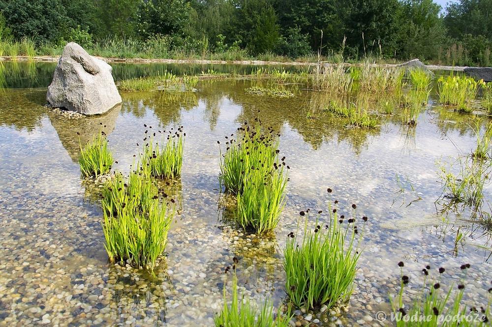 Strefa regeneracyjna w stawie kąpielowym z małą ilością glonów nitkowatych