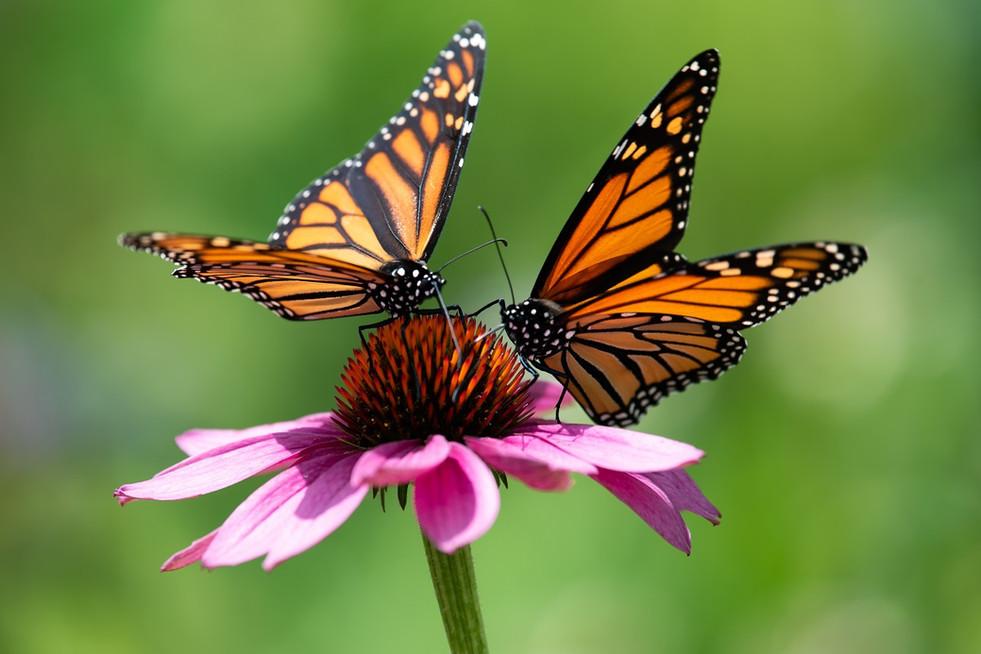 Motyle dzienne