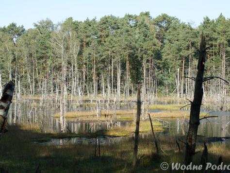 Rezerwat Bocianowskie Bagno