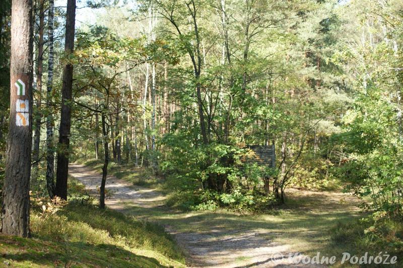 Rozstaj leśnej drogi przy Bocianowskim Bagnie