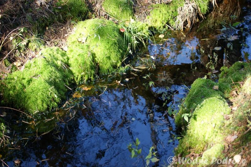 Odpływ nadmiaru wody do leśnych rowów