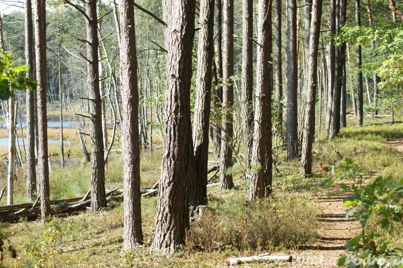 Ścieżka leśna przy samym Gołym Bagnie