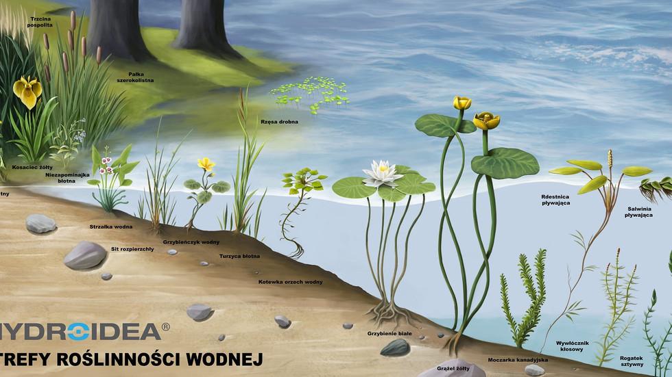 Dobór roślin wodnych do parametrów wody