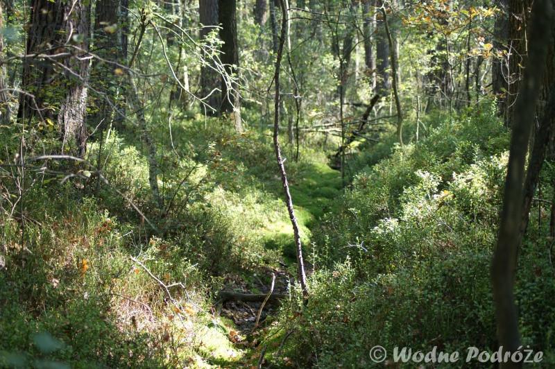 Zalane i porośnięte leśne rowy