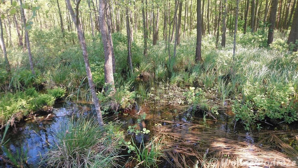 Rośliny wodne w strefie brzegowej jezior, stawów i oczek wodnych
