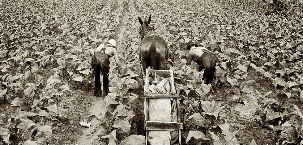 --Farm%20Security%20Administration%20Dor