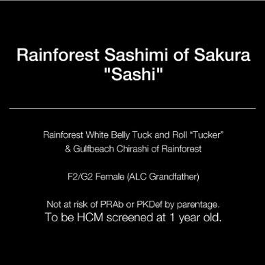 text_square_21_sashi.jpg