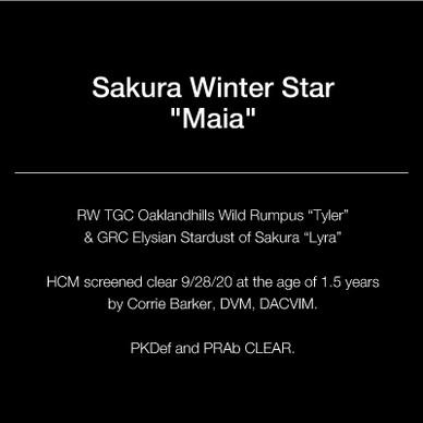 text_square_21_maia.jpg