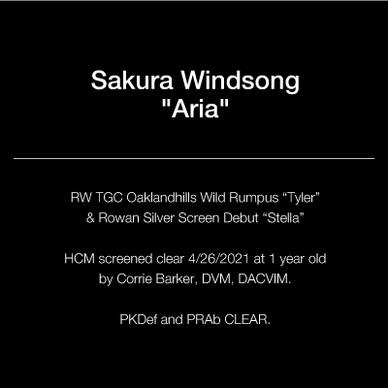 text_square_21_aria.jpg