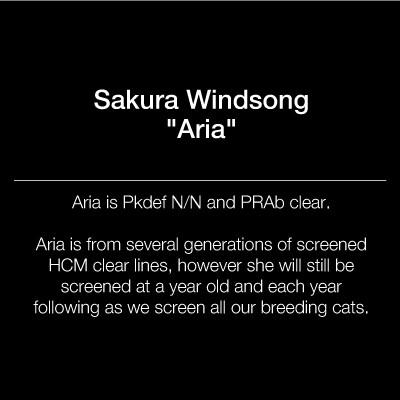 sakurabengals_queen_text_square_aria.jpg