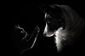 catdog-TAPS.jpg