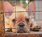 puppymilldog.jpg