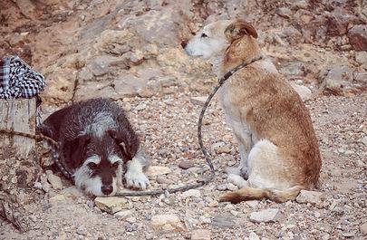 tethering-dogs1.jpg
