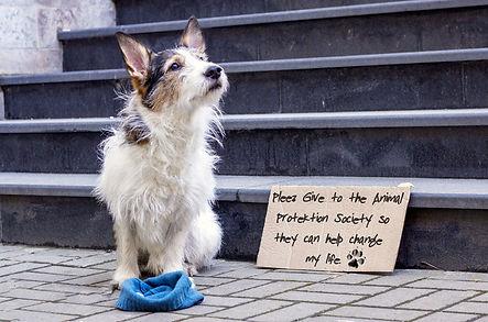 Give-dog.jpg