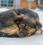 colddog.jpg