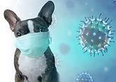 pet-coronavirus-blog.jpg