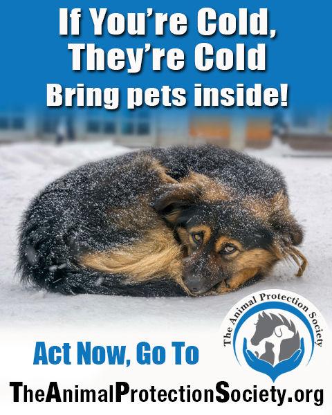 cold dog billboard.jpg