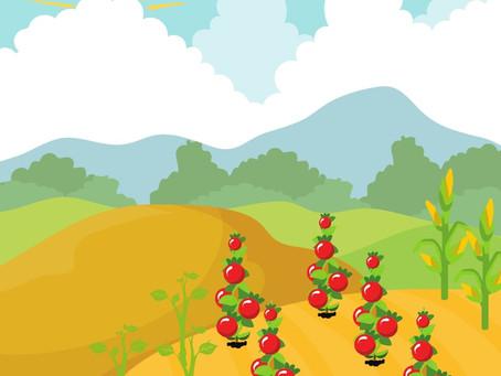 Growing Plants: A Unit Study