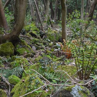 The Jeju Garden