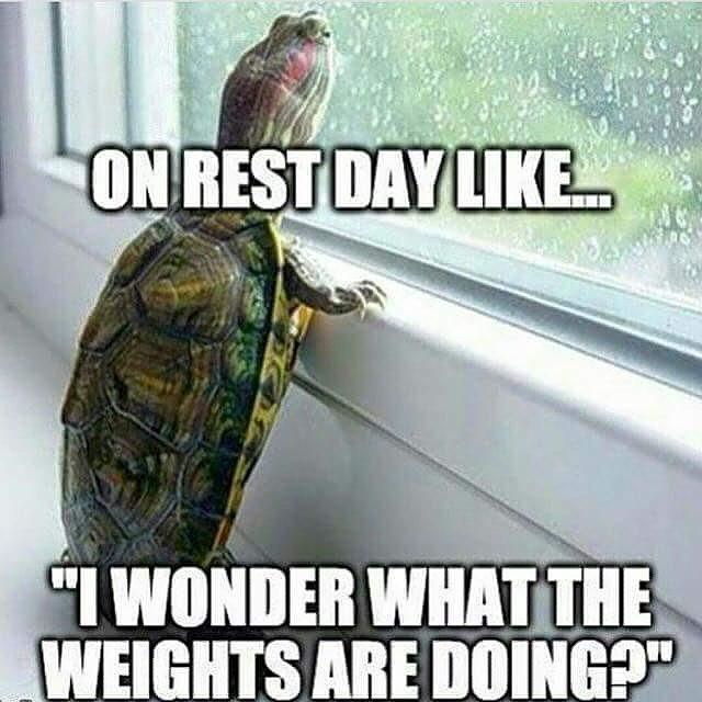 fitness meme
