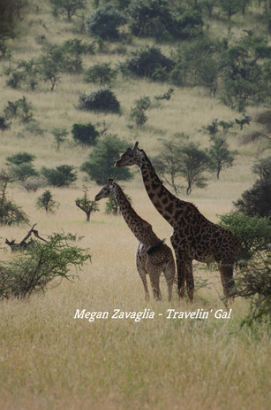 Two Giraffe Looking Left Center Watermar