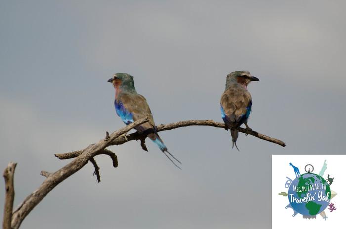 Rocket Birds.jpg