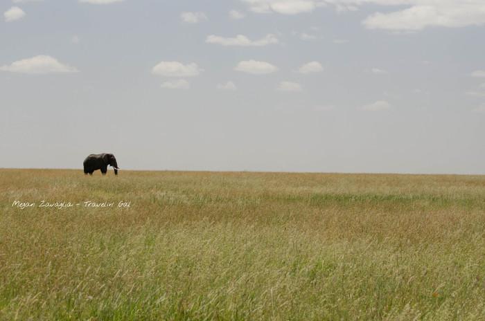 Elephant Grass watermarked under elephan
