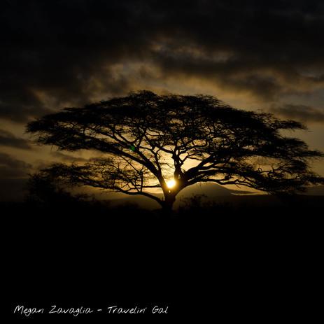 Sunset Acacia.jpg