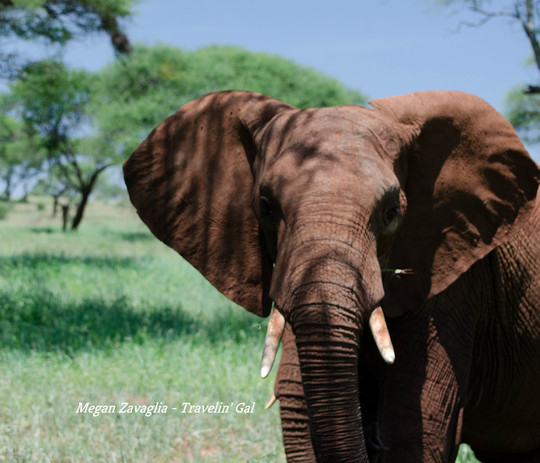 Attentive Young Elephant Square.jpg