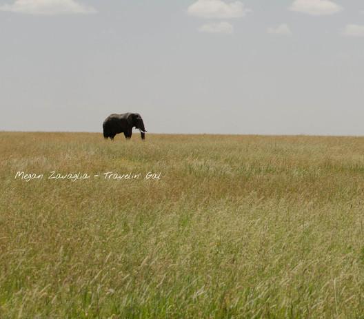 Elephant grass watermarked.jpg