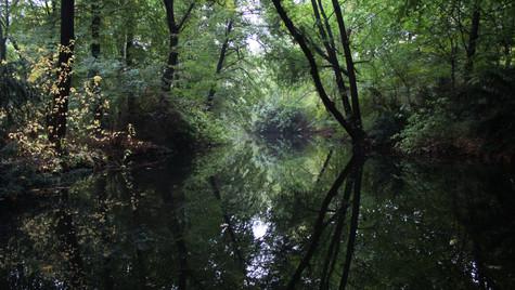 Tiergarten 2.jpg
