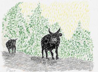 Dessin   Buffles à l'orée de la jungle birmane
