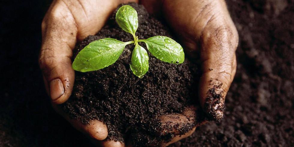 Curso de Permacultura (2)