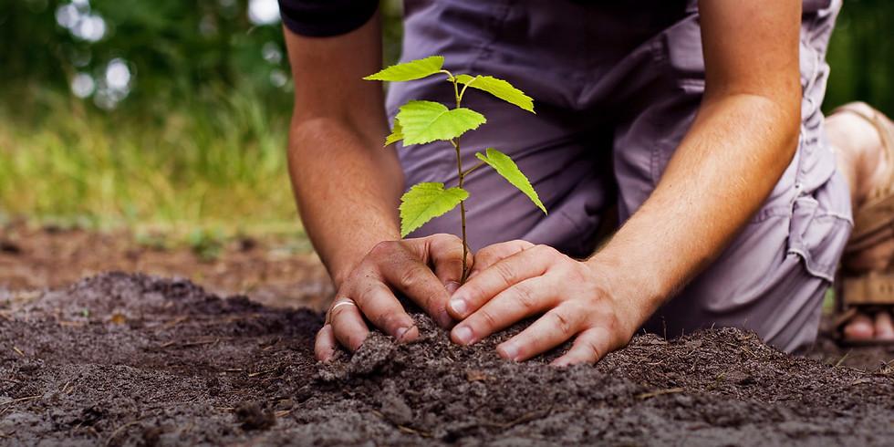 Curso de Permacultura de Agrofloresta
