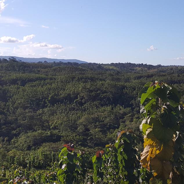 Vista Santa Elena Plantation 2019.jpg