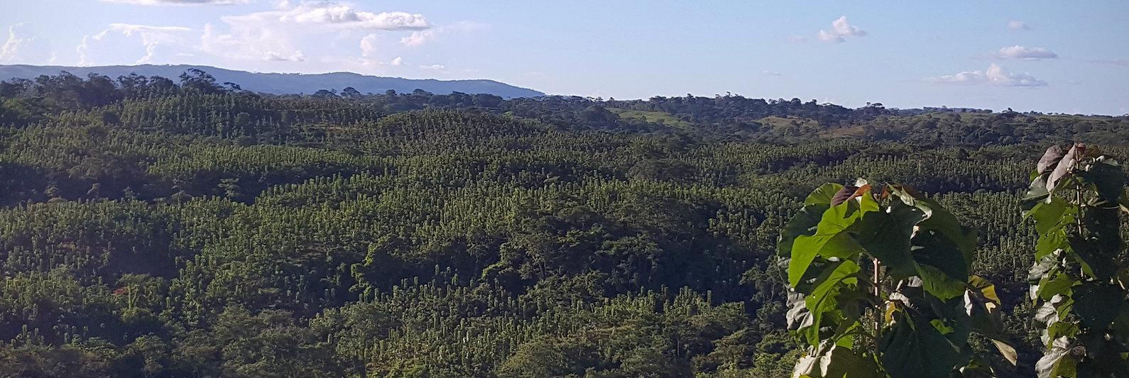 Vista Santa Elena Plantation 2019 (1).jp