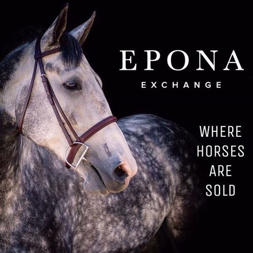 Epona Exchange, where you can buy, sell, and lease horses.