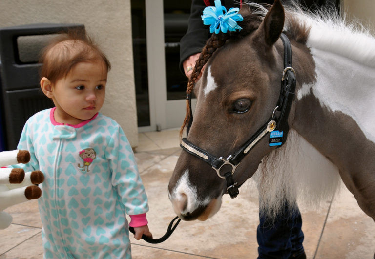 Mini Therapy Horses for Life Equestrian