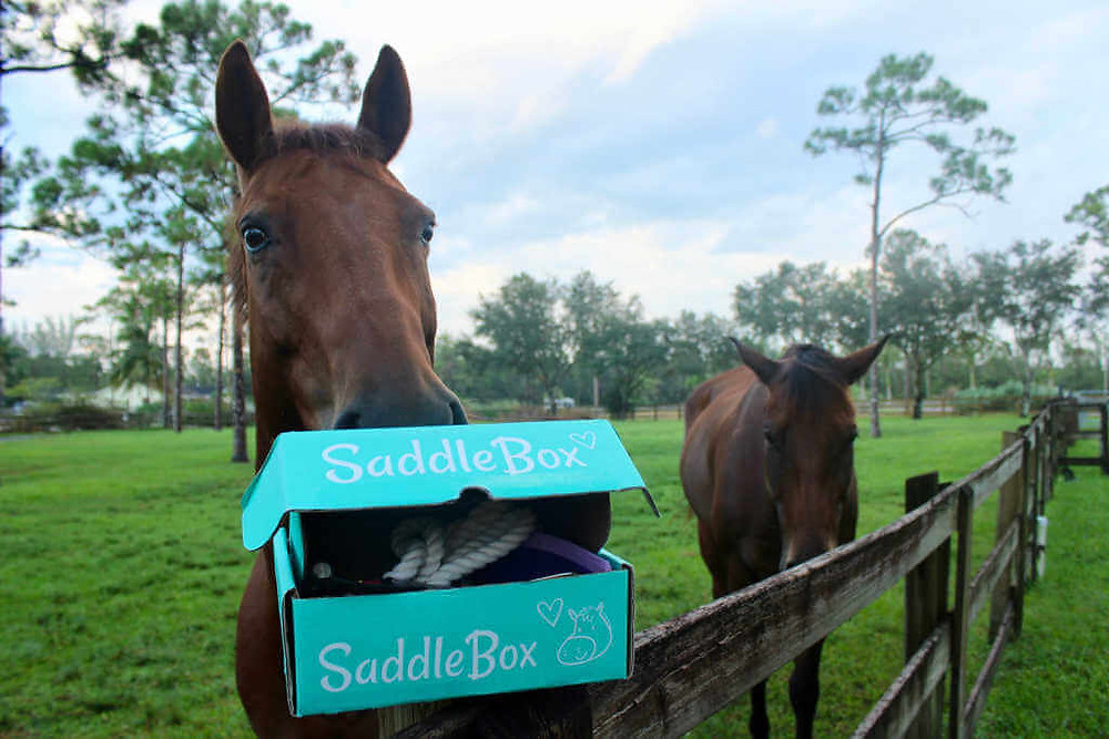 Saddle Box Subscription and Life Equestrian